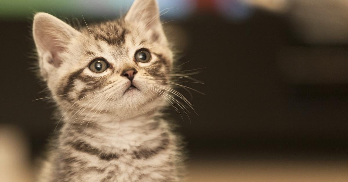 A macskatartás ÁBC-je: mit kell csinálni, ha macskát találsz?