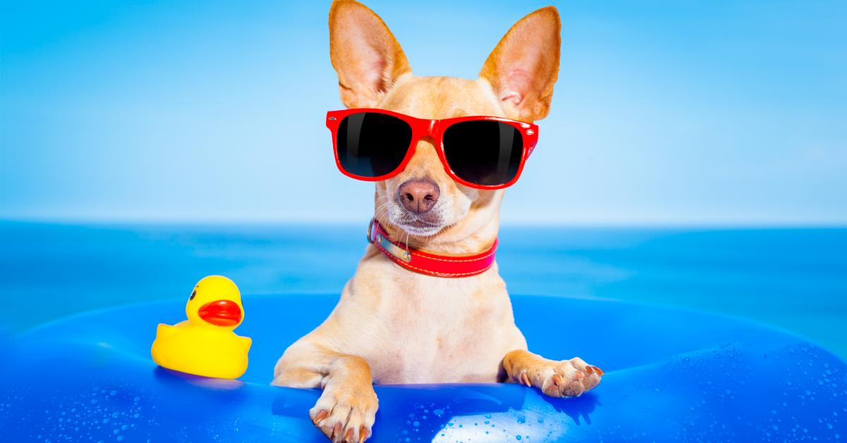 Ha a gazdi nyaralni megy - Életmentő alapszabályok ebtartóknak: Ha magaddal viszed kutyád, és ha otthon hagyod!