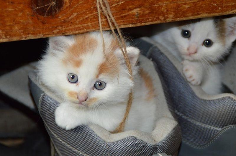 9 mágikus titok a macskákról