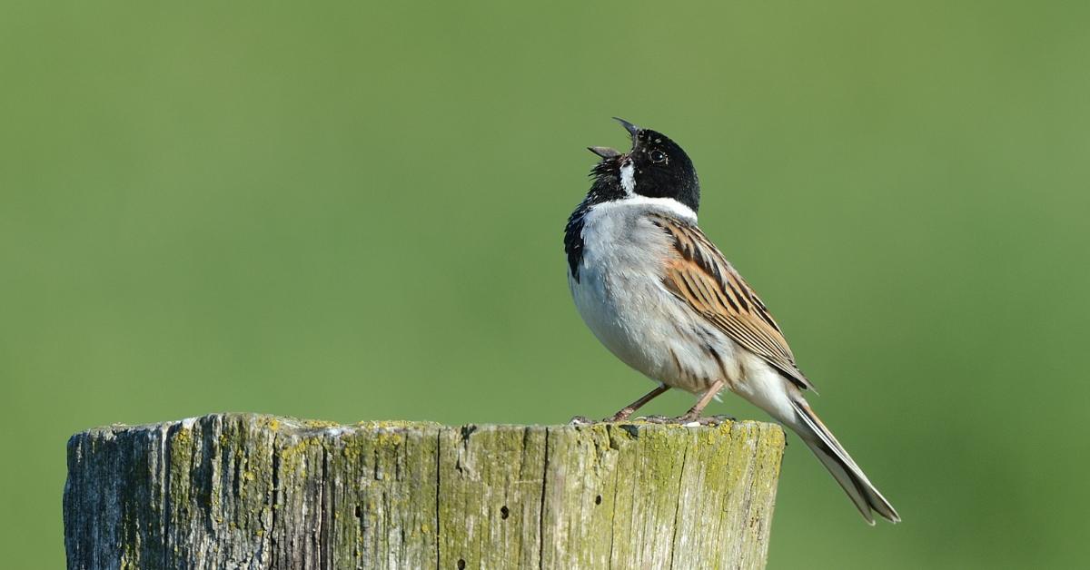 Megtalálták a tavaszi madárdal beindítóját