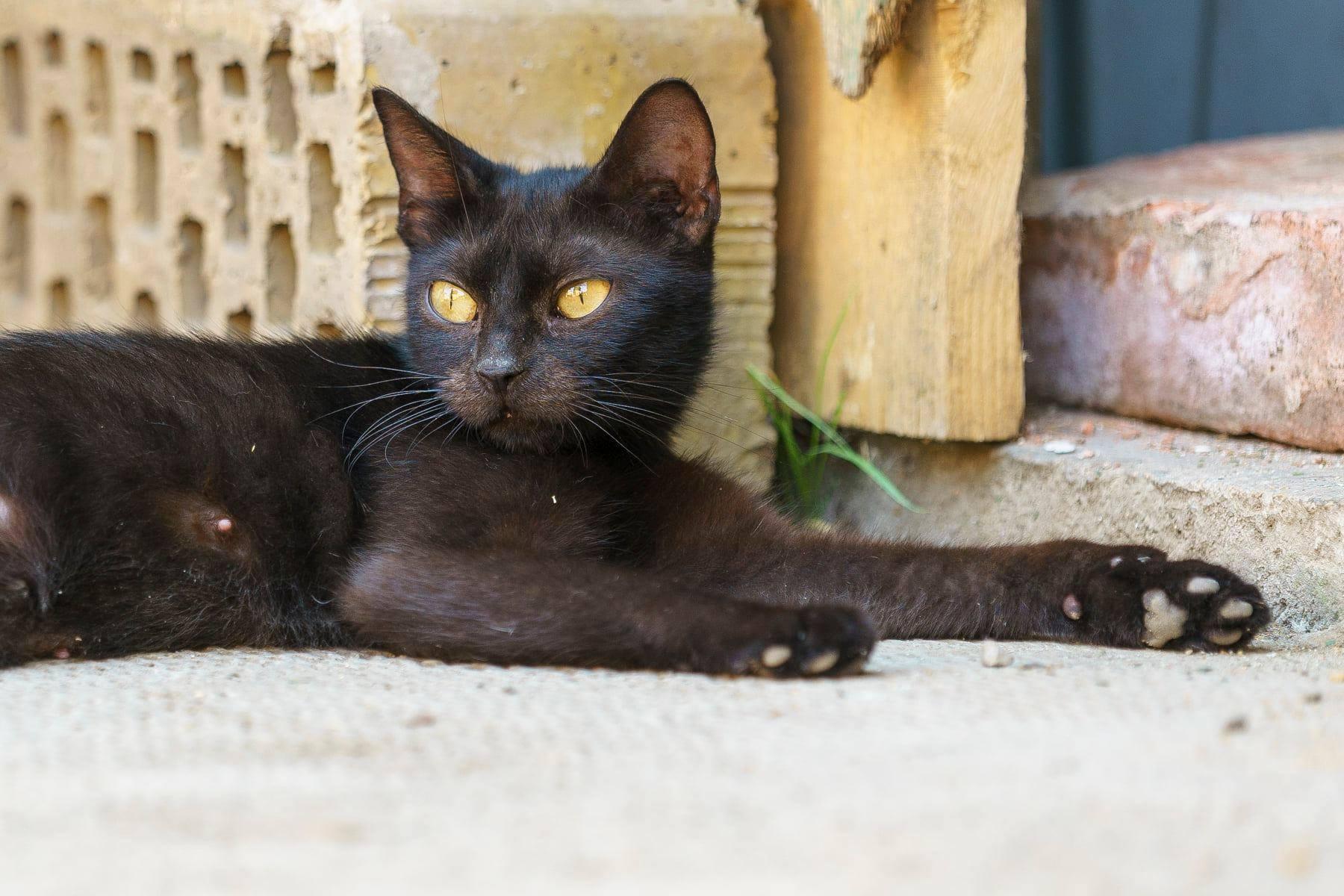 Mit egyen a cica? (... és mit ne?) Macskaetetés helyesen