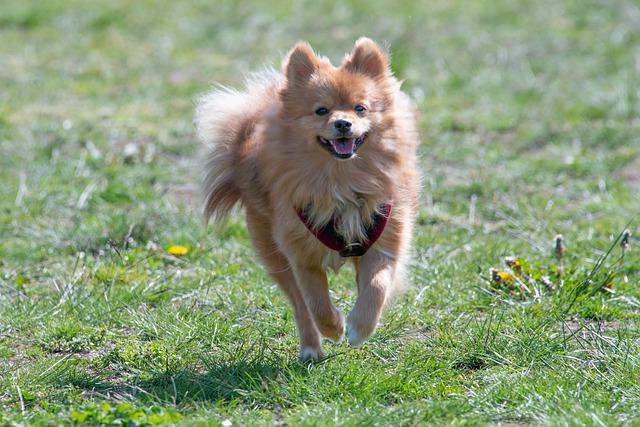 10 dolog, amire figyelj, ha kutyaholmit veszel!