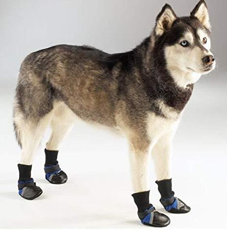 Kutyahideg ellen kutyacipő, kutyaruha házilag
