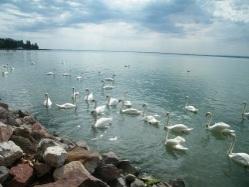 Lovasi nyár - utazási tipp a Balaton felvidékre!