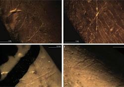 A neandervölgyi ember sötét színű madártollakkal ékesíthette magát