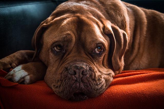 7 misztikus tény a kutyákról