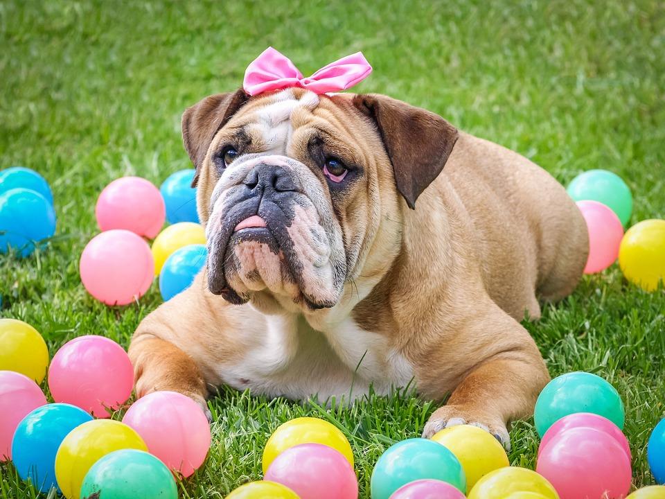Csillogó csokipapírba csent veszély - a húsvéti kutyagyilkos