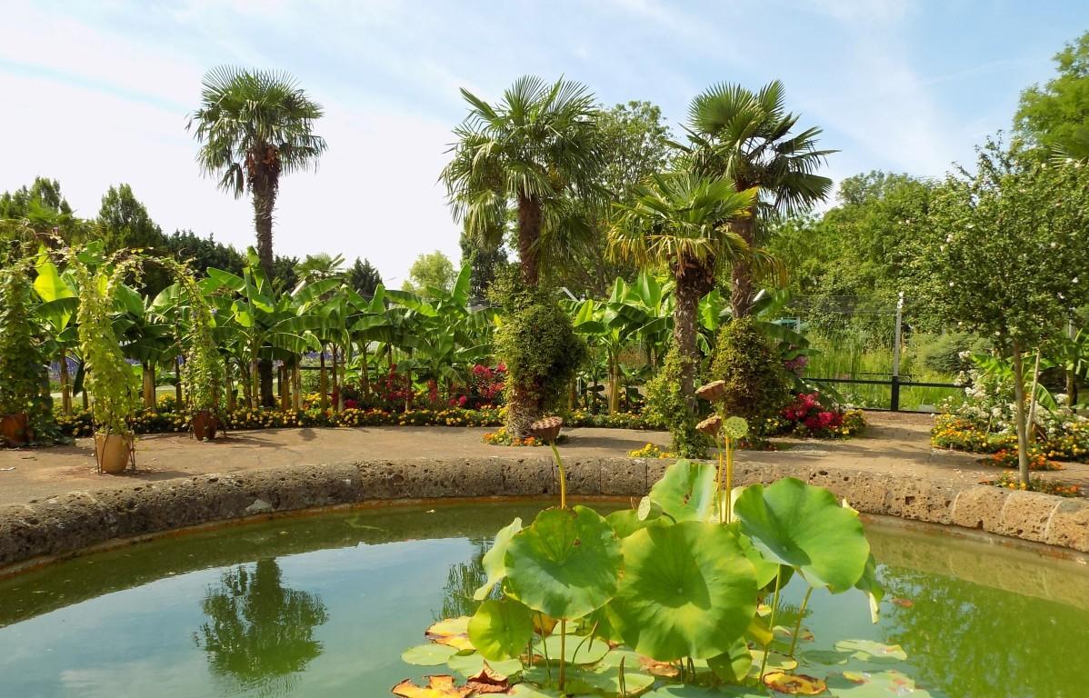 Színpompás virágok és pálmafák - mesés kertek Bécs 22. kerületében