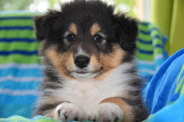 Állatvédők kutyajogsit vezetnének be