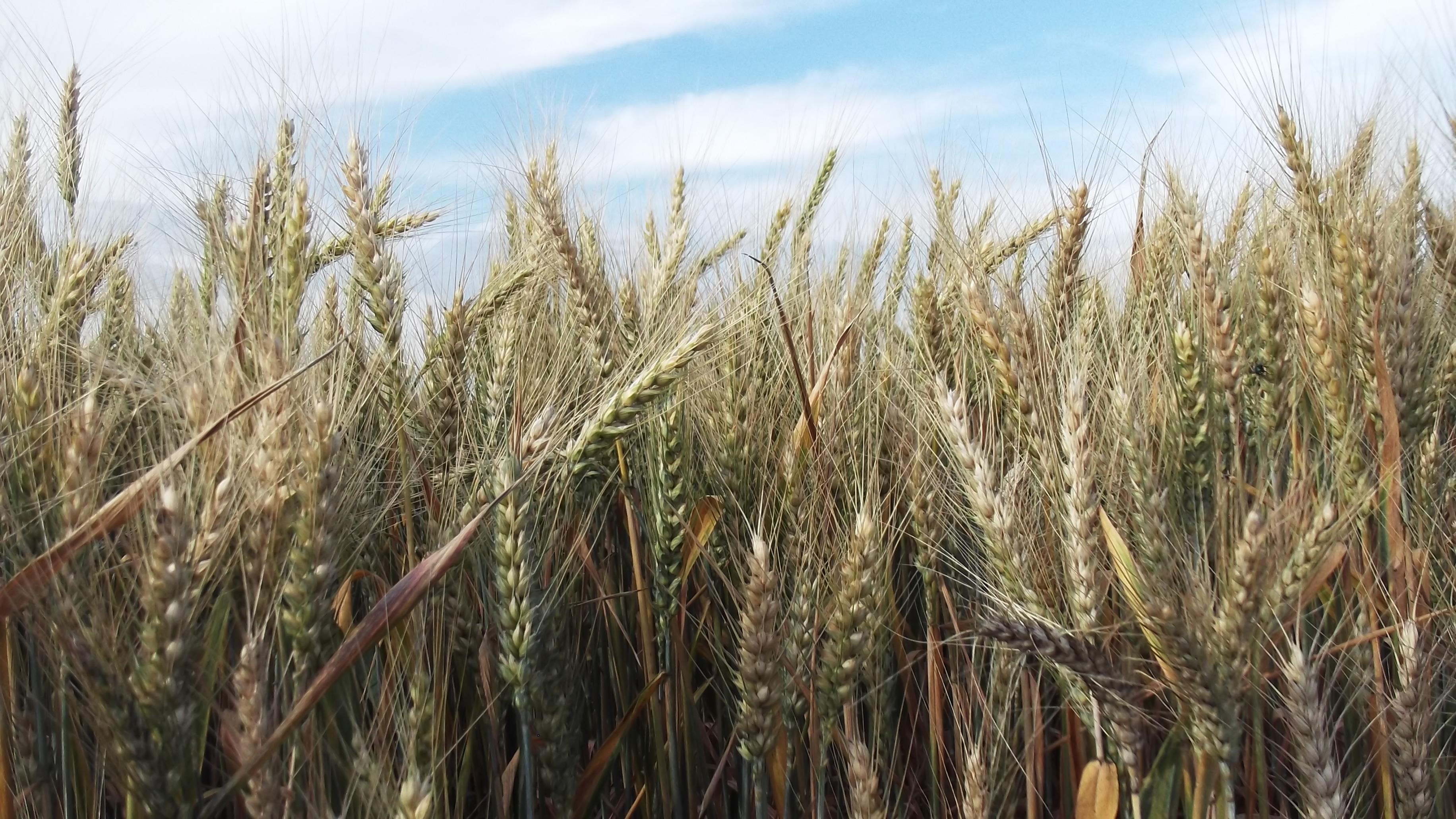 Az intenzív mezőgazdálkodás megöli a természetet