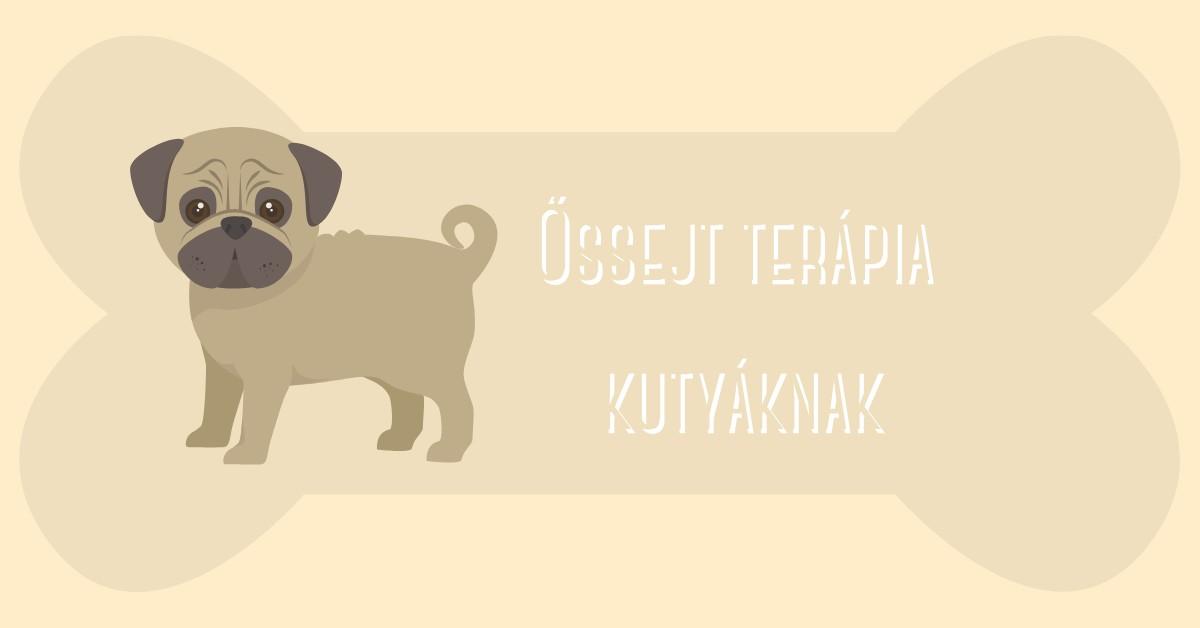 Világújdonság már Magyarországon is: kutyák is gyógyulhatnak őssejt terápiával!