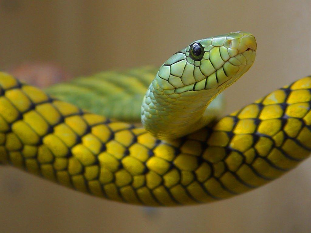 Érzéseink rendezését hozza a Kígyó hónapja