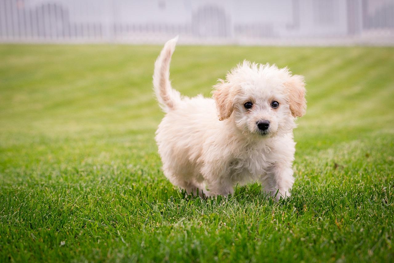 Kutyavilág: kullognak a kullancsok