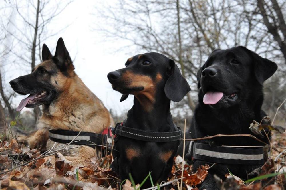 Bármilyen kutyából lehet-e mentőkutya?
