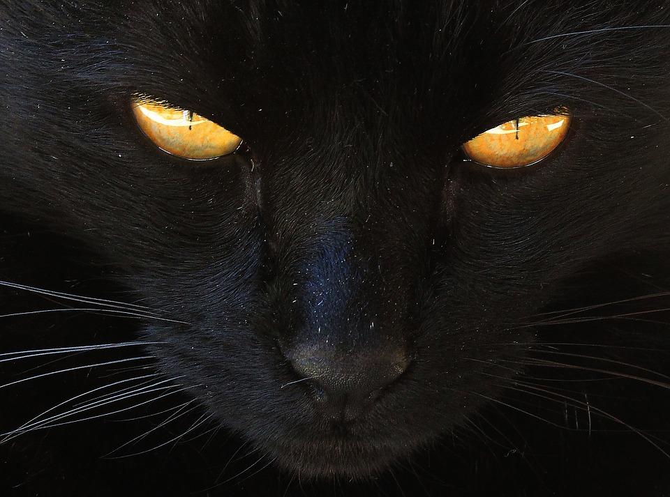 VIGYÁZZ!  A fekete cicák fekete napjai közelednek!