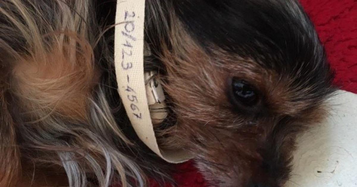 A 90 Forintos ötlet, amivel megmentheted a kutyád életét Szilveszterkor