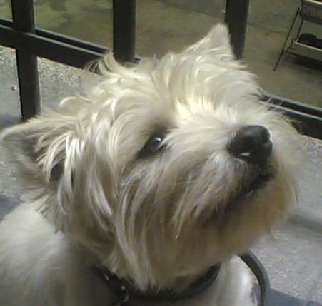 Kutya a játszótéren – friss szemmel a környezettudatos nevelésről